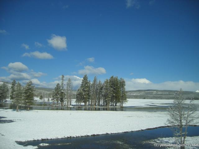 Trees & a pond and snow cover in Yellowstone National Park.jpg