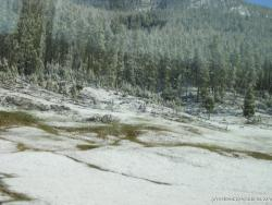 Trees and snow on the way into Yellowstone.jpg