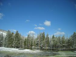 Snow covered trees in a pond in Yellowstone.jpg